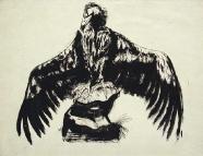 Josef Hegenbarth: Geier mit gespreitzten Flügeln