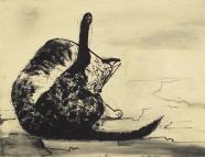 Sich leckende Katze